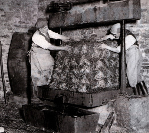 At Butleigh five 'lissoms' of crushed apples have been built up between layers and covers of straw. The juice would flow before the press was even used.
