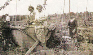 Charlie Piggott's mum is seen on the right, hop-picking in 1945 with Mrs. Dixon and her two boys. Note the billy can on the right