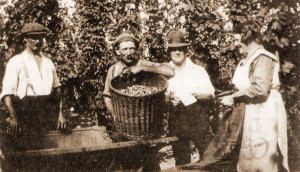 A 1929 photograph showing a hop-picker holding the sack (poke). In trilby hat is the tally man. Most of the time his was a ladies' job.