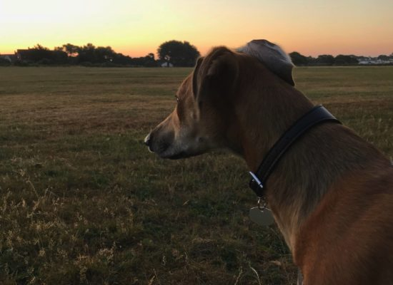 Sonny at sundown
