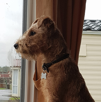 \\\'Dolly\\\' on squirrel watch