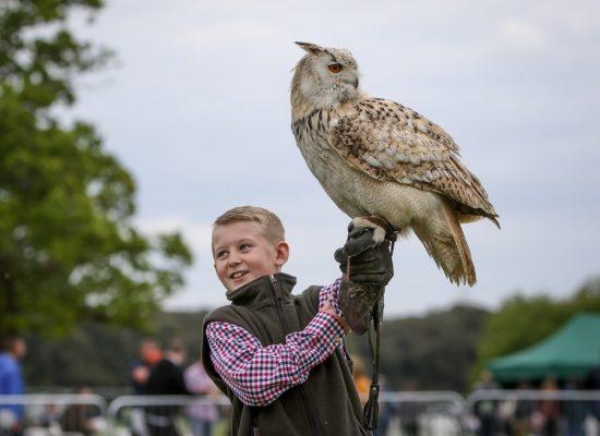 broadlands country show …eagle owl