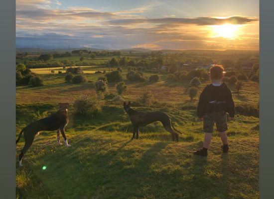 One boy and his dogs watching the sunset