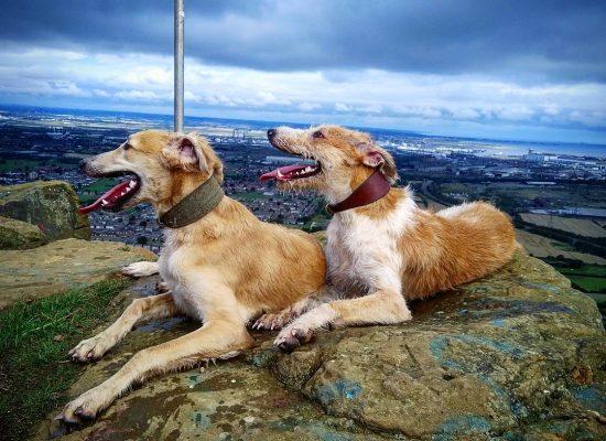 Sandy & rogue