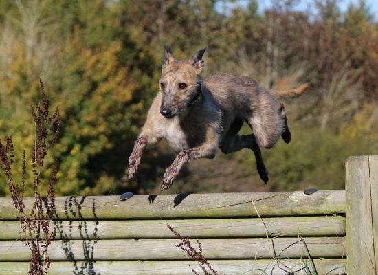 Thimble jumping for fun