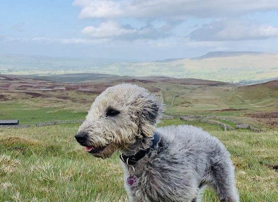 Penny enjoying the view up in the Peak District