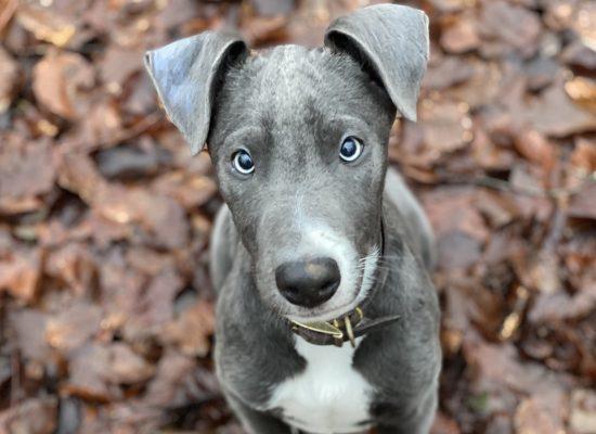 Blu boy
