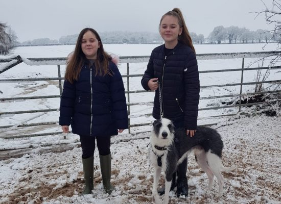 Bailey and Miley enjoying the snow with Blue