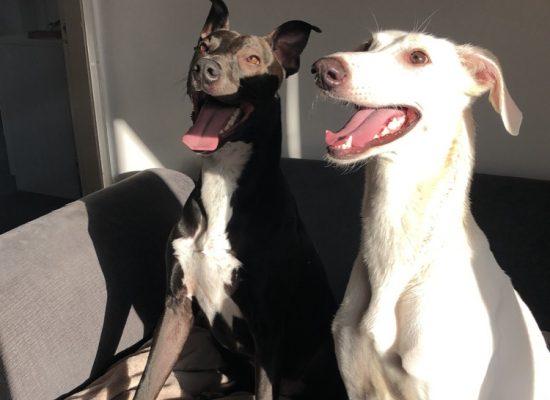 Bella&Bruce