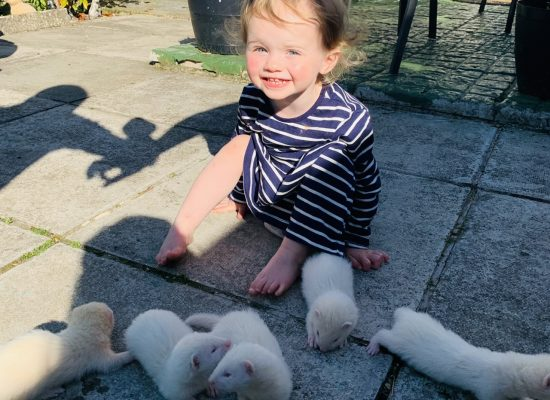 Young ferrets and young handler for next season